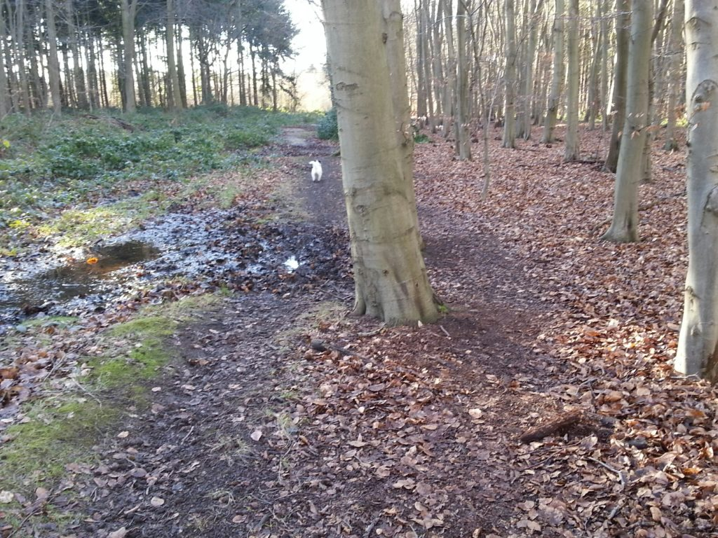 Wood Paths